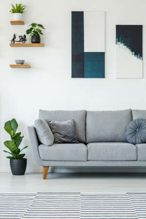 Plant next to grey sofa in white simple living room interior with posters on the wall. Real photo