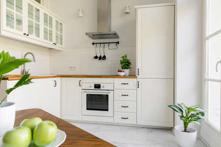 Plant in white minimal kitchen interior with silver cooker hood above wooden countertop. Real photo