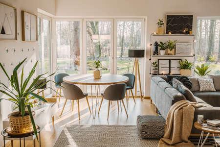 Plante dans un espace ouvert lumineux intérieur avec chaise à table à manger près d'un canapé gris et pouf à motifs