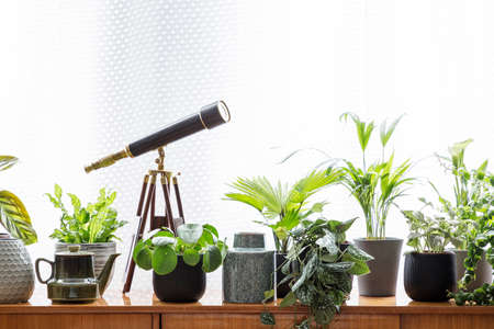 Telescope and plants on wooden cabinet against white background in simple interior. Real photo
