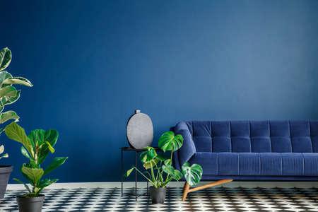 Interior de estilo minimalista con gran sofá azul oscuro de pie sobre un piso de tablero de ajedrez contra la pared vacía monocromática. Muchas plantas verdes. Foto real. Foto de archivo