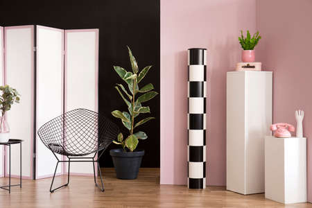 Ficus next to black armchair in pink studio interior with screen