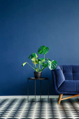 Part of a dark sofa next to a monstera deliciosa plant standing on a table against monochromatic navy blue wall in contemporary living room interior. Checkerboard floor. Copy space. Real photo Stock Photo