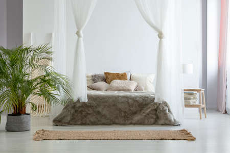 Big fresh plant standing on the floor in white bedroom interior with canopy bed with fur blanket, books on small wooden table with lamp and brown carpet