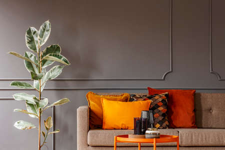 Ficus next to brown sofa with orange pillows in grey living room interior with table. Real photo Stock Photo