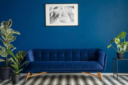 Luxurious dark blue plush couch surrounded by green plants standing on a chessboard floor in a living room interior. Framed poster hanging on a dark wall. Real photo. 免版税图像