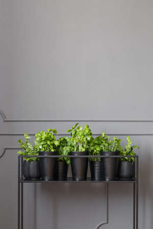 Real photo of plants on a metal stand against dark, empty wall with molding Stock Photo