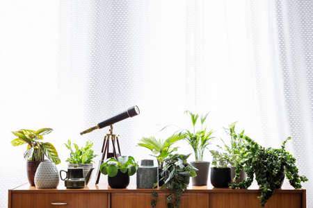 Real photo of plants and a telescope standing on a wooden cupboard next to bright curtains in a living room interior