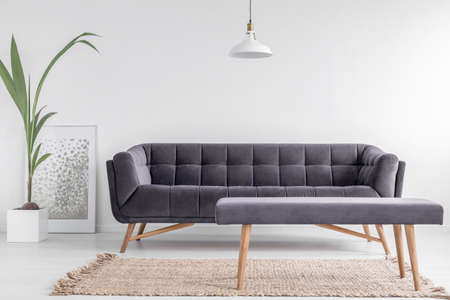 Comfortable upholstered bench on a beige rug and a large, velvet sofa in a bright, white living room interior with a plant. Real photo.