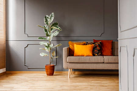 Ficus next to brown couch with orange pillows in dark grey apartment interior. Real photo Stock Photo