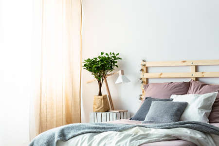 Plant and lamp on table next to wooden bed with pink and grey cushions in bedroom interior. Real photo