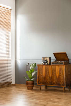 Wooden cabinet next to plant against grey wall in minimal retro flat interior with blinds. Real photo