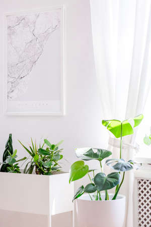 Green plants in a creative white planter and a city map poster on a white wall in a minimalist, hipster apartment interior with natural light