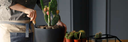 Close-up of gardener fertilizing cactus. Work as a passion and hobby concept Stock Photo