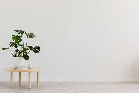 Plant on wooden table against white empty wall with copy space in living room interior. Real photo. Place for your furniture Standard-Bild