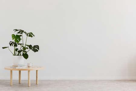 Plant op houten tafel tegen witte lege muur met kopie ruimte in woonkamer interieur. Echte foto. Plaats voor uw meubels Stockfoto