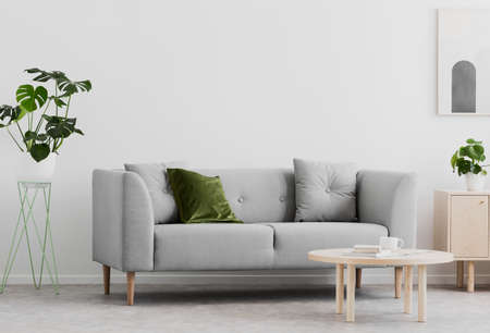 Plant next to grey couch in white living room interior with wooden table and poster. Real photo Stock Photo