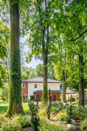Trees in forest with flora and house with garden in the background