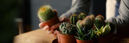 Close-up of person taking care of cacti and succulents