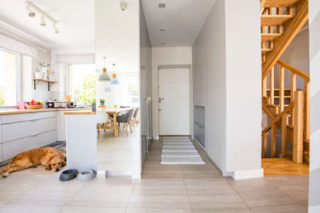 Dog in the kitchen with windows and carpet in hall interior of house next to wooden stairs. Real photo