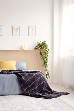 Black blanket thrown on bed in real photo of white bedroom interior with fresh plant, simple posters and window with curtain Stock Photo