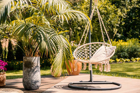 Palm next to hanging chair with cushion on patio in the garden during summer. Real photo Stockfoto