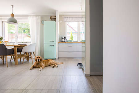 Dog in front of mint fridge in spacious interior with kitchen and chairs at dining table. Real photo
