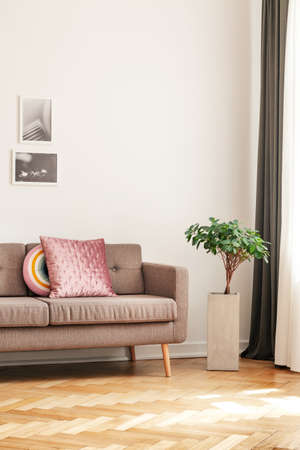 Plant next to sofa with pillows in living room interior with wooden floor and posters. Real photo