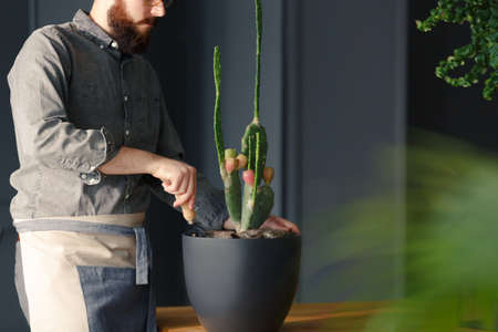 Close-up of man with gardening hobby taking care of cactus at home Stock Photo