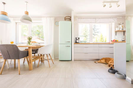 Chairs at table under lamps in bright kitchen interior with fridge and dog next to cabinets. Real photo