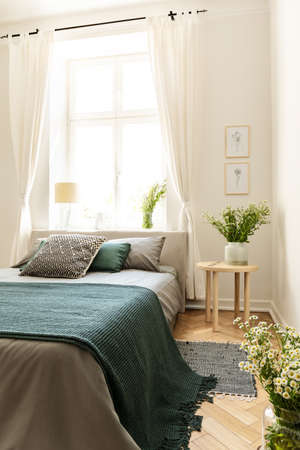 Green blanket on bed next to table with plant in bedroom interior with drapes at window. Real photo 스톡 콘텐츠