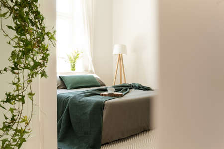 Green blanket and pillows on grey bed in minimal bedroom interior with lamp and plants. Real photo 스톡 콘텐츠