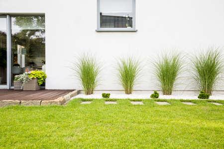 Jardín con pasto verde y cuatro arbustos al lado de una casa.