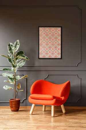 Ficus next to orange armchair against grey wall with poster in modern flat interior. Real photo