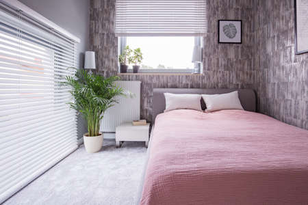 Plant next to bed with pink sheets and pillows in bright bedroom interior with windows. Real photo