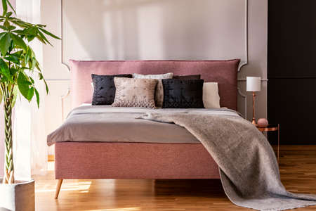 Black and grey pillows on pink bed in pastel bedroom interior with palm and lamp. Real photo Stockfoto