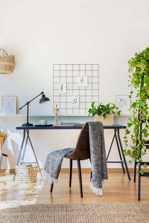 Chair with blanket at desk with lamp and plants in white freelancers interior with carpet. Real photo Фото со стока