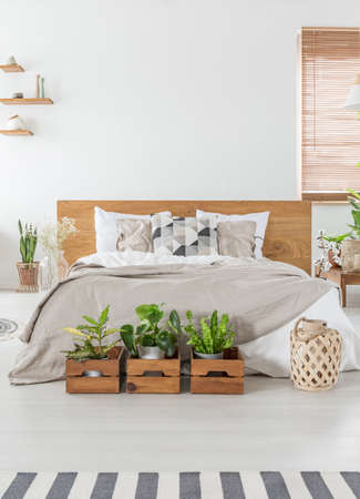 Real photo of a cozy bedroom interior with a double bed, plants in wooden boxes and empty wall in the background. Place your graphic Archivio Fotografico - 107877233