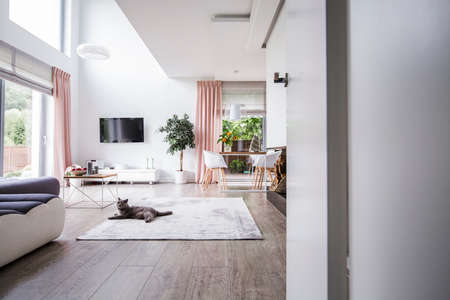 Grey cat on carpet in spacious living room interior with plant, television and chairs at table. Real photo Archivio Fotografico