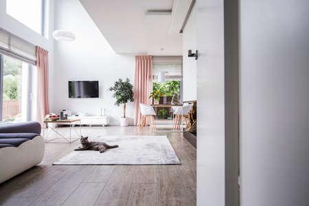 Grijze kat op tapijt in het interieur van de ruime woonkamer met plant, televisie en stoelen aan tafel. Echte foto
