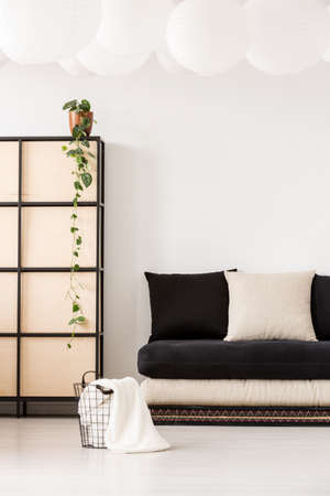 Plant on screen next to black sofa with pillows in minimal and white living room interior with basket. Real photo Stockfoto