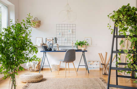 Plants in white spacious home office interior with pouf on carpet near grey chair at desk. Real photo