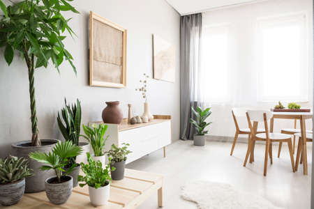 Windows with curtains in real photo of bright dining room interior with fresh green plants, white cupboard with decor and posters with fabrics