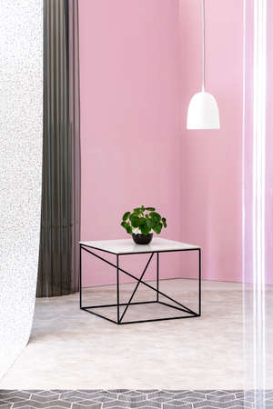 Green plant on a black industrial table with marble countertop and a white pendant light in a pink apartment room interior. Real photo.