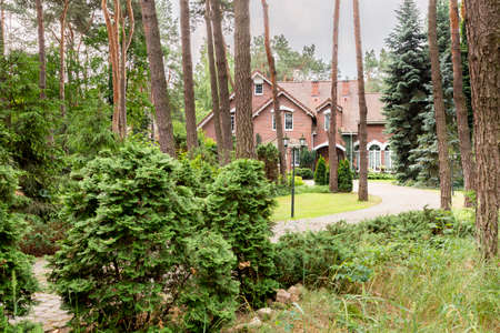 Real photo of a forest with coniferous shrubs, trees and english style house