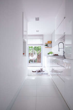 Real photo of a clean, white kitchen interior with glossy cupboards, steel faucet and a gray cat on the floor Banco de Imagens