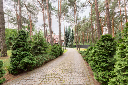 Cobblestone road in the woods leading to an old house. Real photo