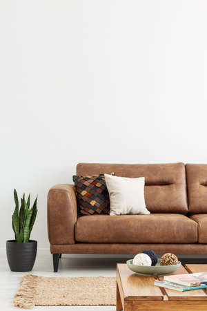 Plant next to leather settee with cushions in white apartment interior with wooden table. Real photo