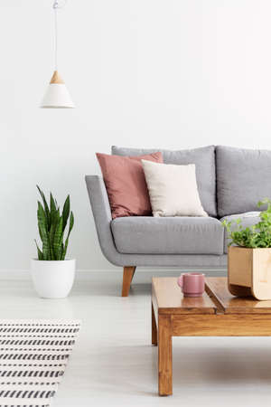Pillows on grey couch in white simple living room interior with plant on wooden table. Real photo