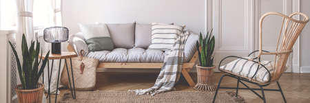 Panorama of armchair near wooden sofa in natural living room interior with plants. Real photo